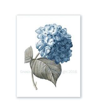 Blue Flowers Botanical Prints Set Of 4 Unframed Hydrangeas Botanical Art Prints Farmhouse Decor BlueHydrangea4A 0 2 300x360