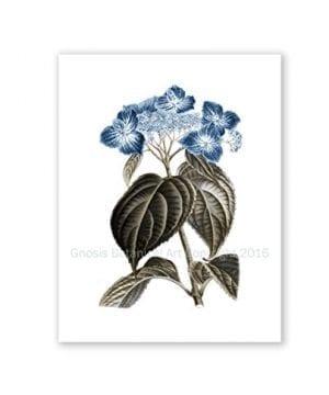 Blue Flowers Botanical Prints Set Of 4 Unframed Hydrangeas Botanical Art Prints Farmhouse Decor BlueHydrangea4A 0 3 300x360