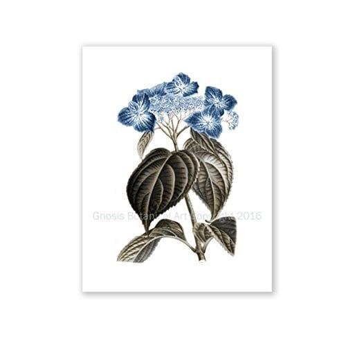 Blue Flowers Botanical Prints Set Of 4 Unframed Hydrangeas Botanical Art Prints Farmhouse Decor BlueHydrangea4A 0 3