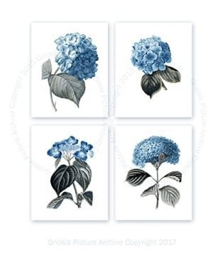 Blue Flowers Botanical Prints Set Of 4 Unframed Hydrangeas Botanical Art Prints Farmhouse Decor BlueHydrangea4A 0 300x360