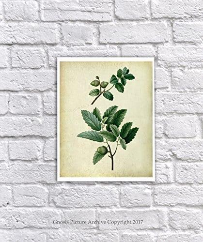 Farmhouse Decor Set Of 4 Unframed Oak Leaf Art Prints Vintage Botanical Prints Home Decor OakLeaveVintage4A 0 1