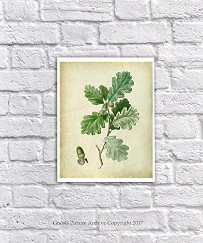 Farmhouse Decor Set Of 4 Unframed Oak Leaf Art Prints Vintage Botanical Prints Home Decor OakLeaveVintage4A 0 2
