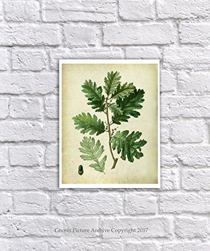 Farmhouse Decor Set Of 4 Unframed Oak Leaf Art Prints Vintage Botanical Prints Home Decor OakLeaveVintage4A 0 3