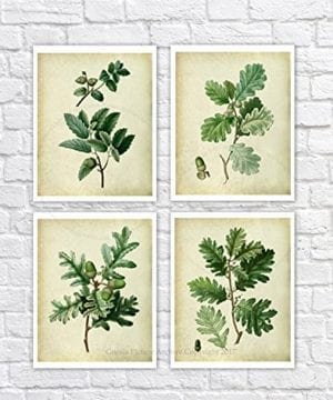 Farmhouse Decor Set Of 4 Unframed Oak Leaf Art Prints Vintage Botanical Prints Home Decor OakLeaveVintage4A 0 300x360