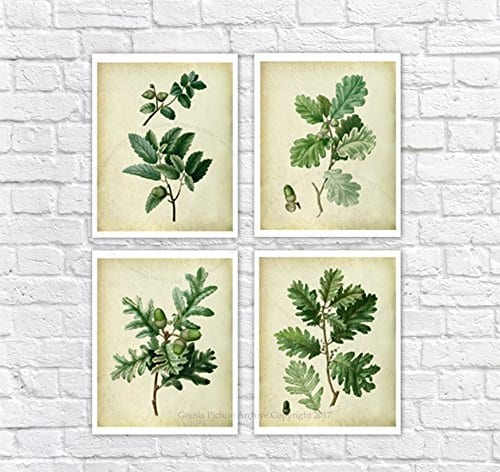 Farmhouse Decor Set Of 4 Unframed Oak Leaf Art Prints Vintage Botanical Prints Home Decor OakLeaveVintage4A 0