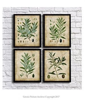 Farmhouse Wall Decor Olive Plants Home Decor Set Of 4 Unframed Botanical Art Prints Oliveplants4A 0 0 300x360