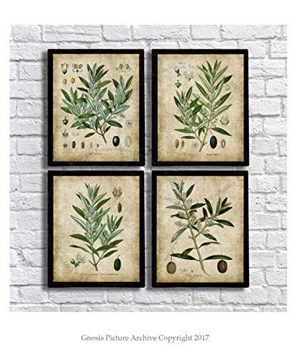 Farmhouse Wall Decor Olive Plants Home Decor Set Of 4 Unframed Botanical Art Prints Oliveplants4A 0 0