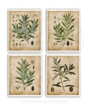 Farmhouse Wall Decor Olive Plants Home Decor Set Of 4 Unframed Botanical Art Prints Oliveplants4A 0 300x360