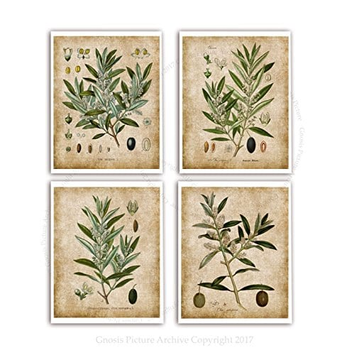 Farmhouse Wall Decor Olive Plants Home Decor Set Of 4 Unframed Botanical Art Prints Oliveplants4A 0