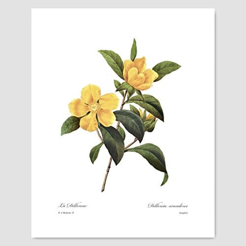 Set Of 3 Botanical Art Yellow Flower Prints Redoute French Home Wall Decor Daffodil Sunflower 8x10 Unframed 0 0