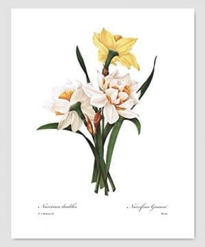Set Of 3 Botanical Art Yellow Flower Prints Redoute French Home Wall Decor Daffodil Sunflower 8x10 Unframed 0 1 300x360