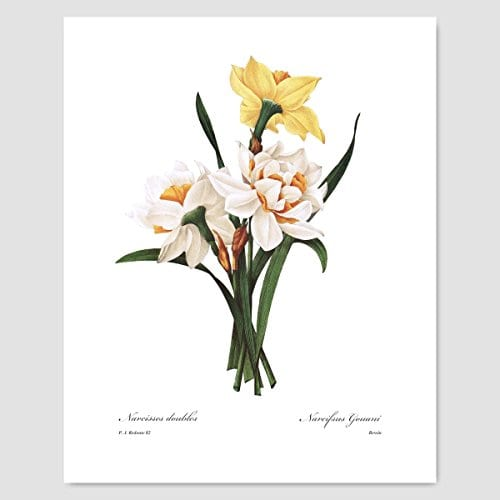 Set Of 3 Botanical Art Yellow Flower Prints Redoute French Home Wall Decor Daffodil Sunflower 8x10 Unframed 0 1