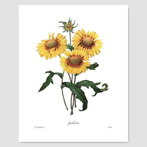 Set Of 3 Botanical Art Yellow Flower Prints Redoute French Home Wall Decor Daffodil Sunflower 8x10 Unframed 0 2