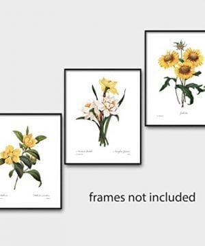 Set Of 3 Botanical Art Yellow Flower Prints Redoute French Home Wall Decor Daffodil Sunflower 8x10 Unframed 0 3 300x360
