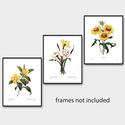 Set Of 3 Botanical Art Yellow Flower Prints Redoute French Home Wall Decor Daffodil Sunflower 8x10 Unframed 0 3