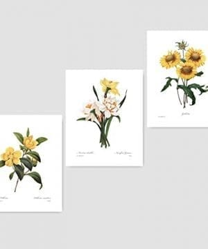 Set Of 3 Botanical Art Yellow Flower Prints Redoute French Home Wall Decor Daffodil Sunflower 8x10 Unframed 0 300x360