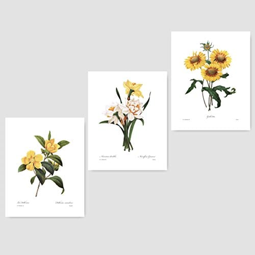 Set Of 3 Botanical Art Yellow Flower Prints Redoute French Home Wall Decor Daffodil Sunflower 8x10 Unframed 0