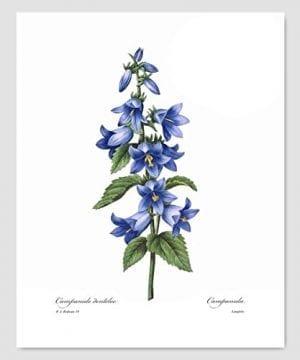 Set Of 3 Botanical Prints Blue Wall Art Redoute Flower Home Cottage Decor Campanula Lotus Iris 8x10 Unframed 0 1 300x360