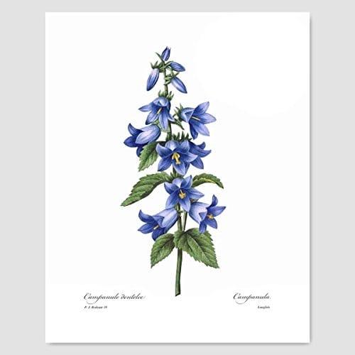 Set Of 3 Botanical Prints Blue Wall Art Redoute Flower Home Cottage Decor Campanula Lotus Iris 8x10 Unframed 0 1