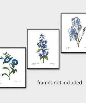 Set Of 3 Botanical Prints Blue Wall Art Redoute Flower Home Cottage Decor Campanula Lotus Iris 8x10 Unframed 0 3 300x360