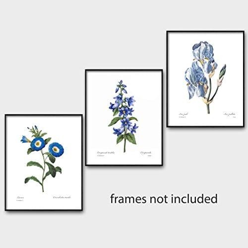 Set Of 3 Botanical Prints Blue Wall Art Redoute Flower Home Cottage Decor Campanula Lotus Iris 8x10 Unframed 0 3