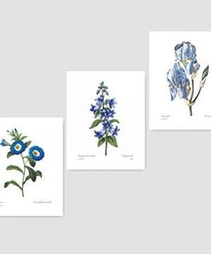 Set Of 3 Botanical Prints Blue Wall Art Redoute Flower Home Cottage Decor Campanula Lotus Iris 8x10 Unframed 0 300x360
