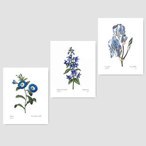Set Of 3 Botanical Prints Blue Wall Art Redoute Flower Home Cottage Decor Campanula Lotus Iris 8x10 Unframed 0