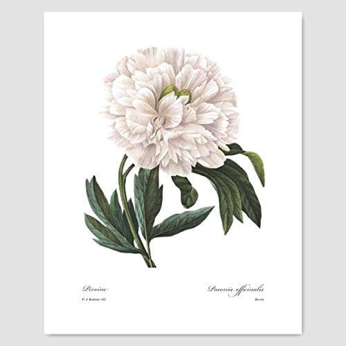 Set Of 3 Botanical Prints White Home Decor Room Redoute Flower Wall Art Camellia Peony Magnolia 8x10 Unframed 0 0