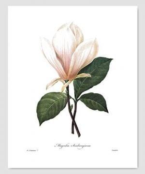Set Of 3 Botanical Prints White Home Decor Room Redoute Flower Wall Art Camellia Peony Magnolia 8x10 Unframed 0 1 300x360