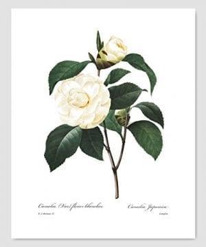 Set Of 3 Botanical Prints White Home Decor Room Redoute Flower Wall Art Camellia Peony Magnolia 8x10 Unframed 0 2 300x360