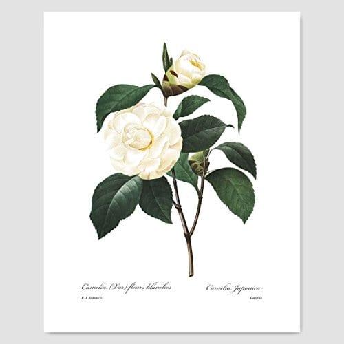 Set Of 3 Botanical Prints White Home Decor Room Redoute Flower Wall Art Camellia Peony Magnolia 8x10 Unframed 0 2