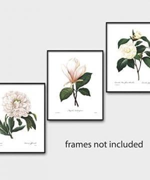 Set Of 3 Botanical Prints White Home Decor Room Redoute Flower Wall Art Camellia Peony Magnolia 8x10 Unframed 0 3 300x360