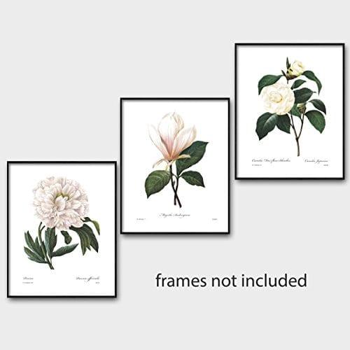 Set Of 3 Botanical Prints White Home Decor Room Redoute Flower Wall Art Camellia Peony Magnolia 8x10 Unframed 0 3