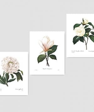 Set Of 3 Botanical Prints White Home Decor Room Redoute Flower Wall Art Camellia Peony Magnolia 8x10 Unframed 0 300x360