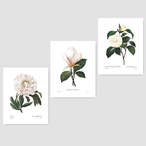 Botanical Wall Art Camellia Print Flower French Country White Home Decor