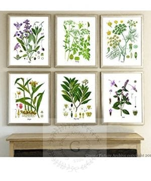 Herbs Kitchen Wall Decor Set Of 6 Unframed Culinary Herbs Botanical Art Prints Kitchen Decor Dining Room Decor 0 0 300x360