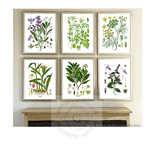 Herbs Kitchen Wall Decor Set Of 6 Unframed Culinary Herbs Botanical Art Prints Kitchen Decor Dining Room Decor 0 0