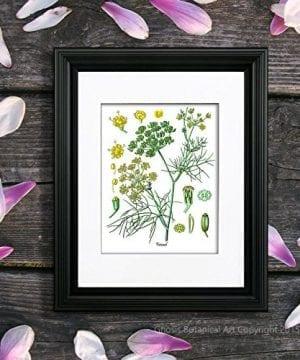 Herbs Kitchen Wall Decor Set Of 6 Unframed Culinary Herbs Botanical Art Prints Kitchen Decor Dining Room Decor 0 1 300x360