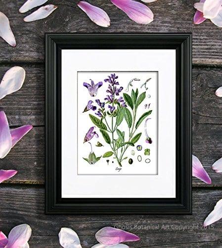 Herbs Kitchen Wall Decor Set Of 6 Unframed Culinary Herbs Botanical Art Prints Kitchen Decor Dining Room Decor 0 2