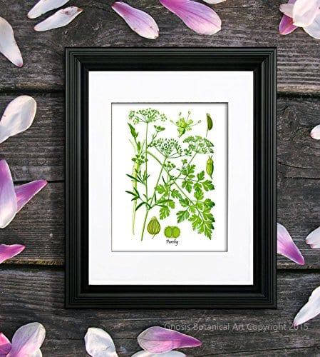 Herbs Kitchen Wall Decor Set Of 6 Unframed Culinary Herbs Botanical Art Prints Kitchen Decor Dining Room Decor 0 3