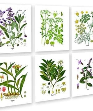Herbs Kitchen Wall Decor Set Of 6 Unframed Culinary Herbs Botanical Art Prints Kitchen Decor Dining Room Decor 0 300x360
