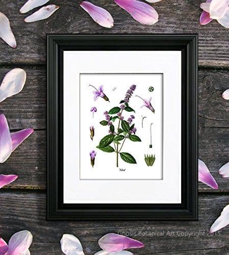 Herbs Kitchen Wall Decor Set Of 6 Unframed Culinary Herbs Botanical Art Prints Kitchen Decor Dining Room Decor 0 4