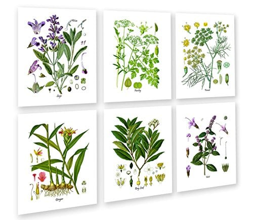 Herbs Kitchen Wall Decor Set Of 6 Unframed Culinary Herbs Botanical Art Prints Kitchen Decor Dining Room Decor 0