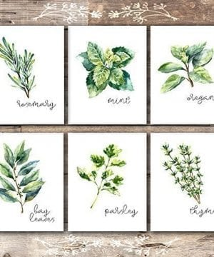 Kitchen Herbs Art Prints Botanical Prints Set Of 6 Unframed 8x10s 0 300x360