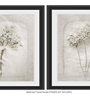 Queen Annes Lace Wall Art 8x10 Prints Cottage Decor Cream Wall Decor Fixer Upper Farmhouse Rustic Gift For Her 0 300x322