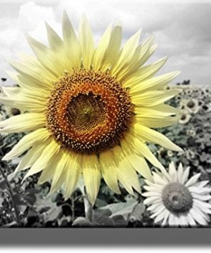 Big Sunflower On Farm Picture On Stretched Canvas Wall Art Dcor Ready To Hang 0 300x360