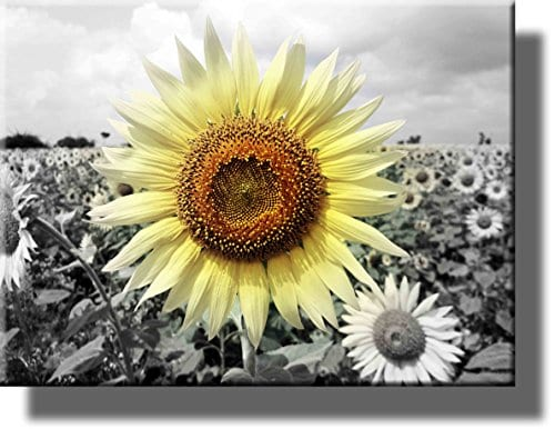 Big Sunflower On Farm Picture On Stretched Canvas Wall Art Dcor Ready To Hang 0