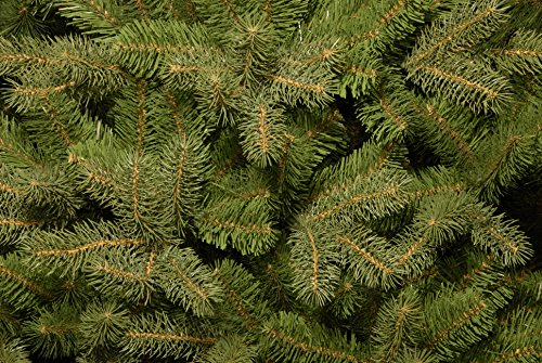 National Tree 75 Foot Feel Real Downswept Douglas Fir Tree Hinged PEDD1 503 75 0 0