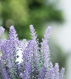 Velener Artificial Flower Potted Lavender Plant For Home Decor Wooden Tray 9 Long 0 0 300x333