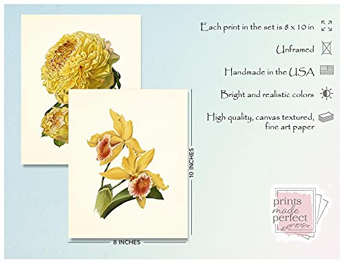 Vintage Yellow Flower Art Prints Botanical Wall Decor Set Of 6 8 X 10 Unframed 0 0